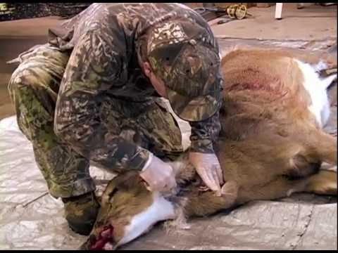 Deer hunting field dressing and quartering