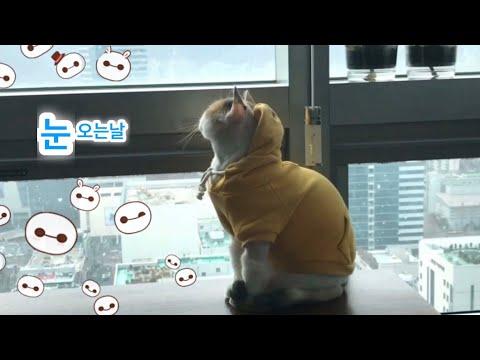 🐾 눈오는 풍경 보고 있는 고양이