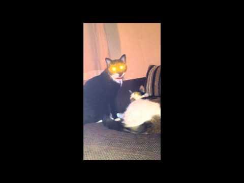 funny dog licking pussyKaynak: YouTube · Süre: 2 dakika25 saniye