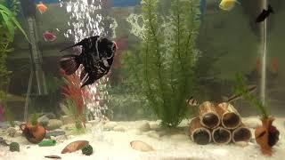 Аквариумные рыбки, видео в хорошем качестве
