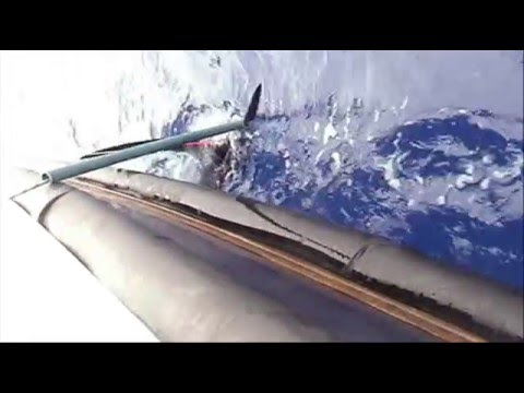 Madeira Marlin Trophy 0001 OUR MARY
