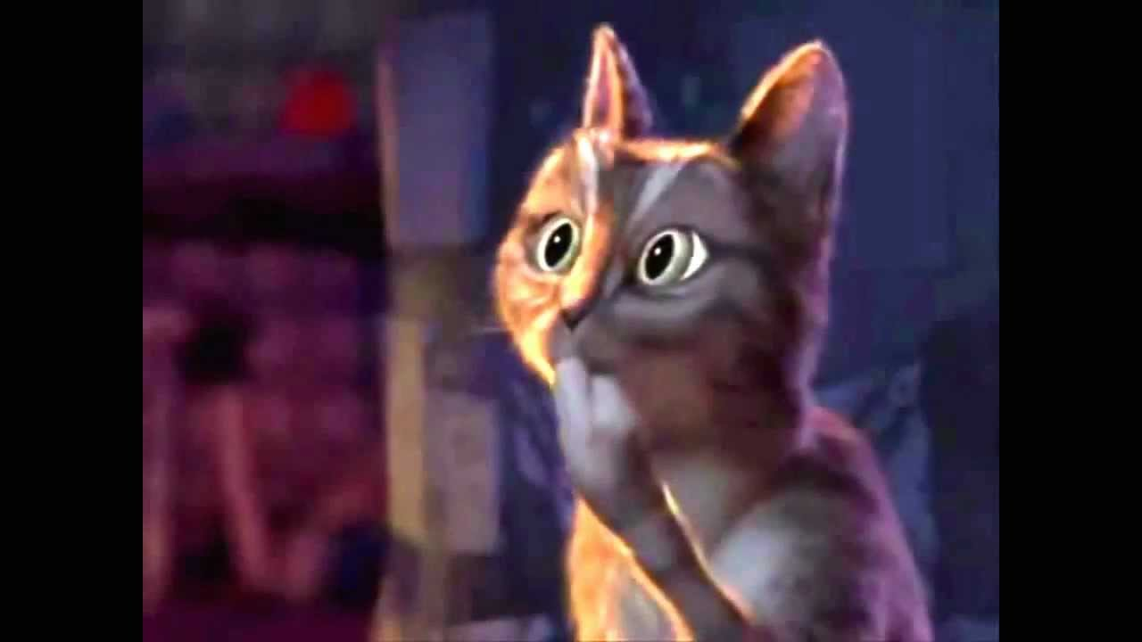 Got It Meme Cat