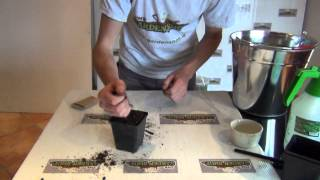 Sowing Chive Seeds