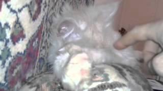 Кот странно спит)