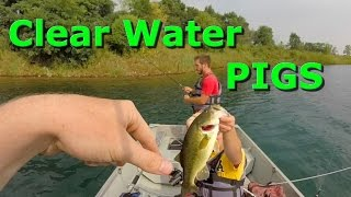 Crazy Clear Water Bass and Pike