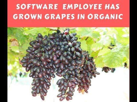 Software employee doing organic farming | Grape farming | Dr.Soil