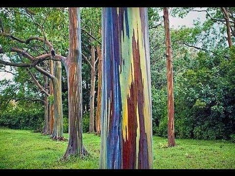 Muhteşem Öyküleriyle 5 İnanılmaz Ağaç
