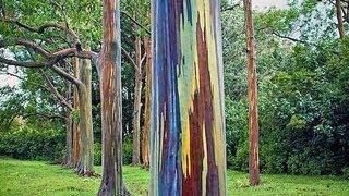 Muhteşem Öykülerıyle 5 İnanılmaz Ağaç