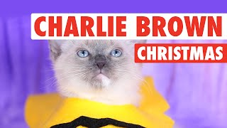 A Charlie Brown Christmas (Kitten Version)