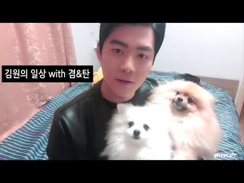 [김원의 일상방송] 포메라이언 겸이와 탄이 1부 자기소개
