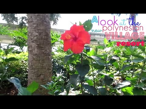 Krista's DCP 2015 - A Look at the New Polynesian Village Resort