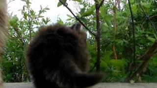 Котёнок по имени Тёма (Брут) и РЫЧ