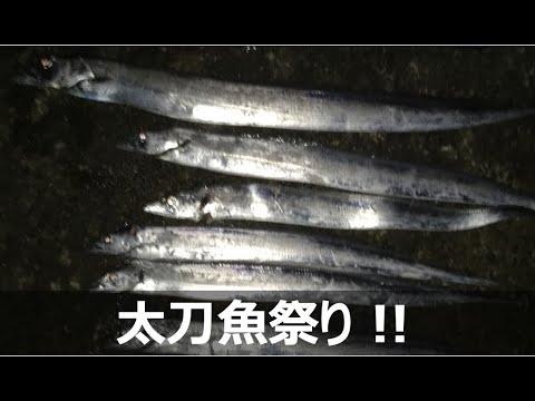 タチウオ 横須賀 東京湾で船が大渋滞 銀色に輝くタチウオを追え!