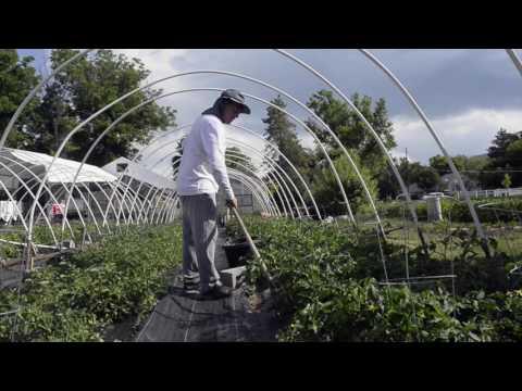 Borski organic farm