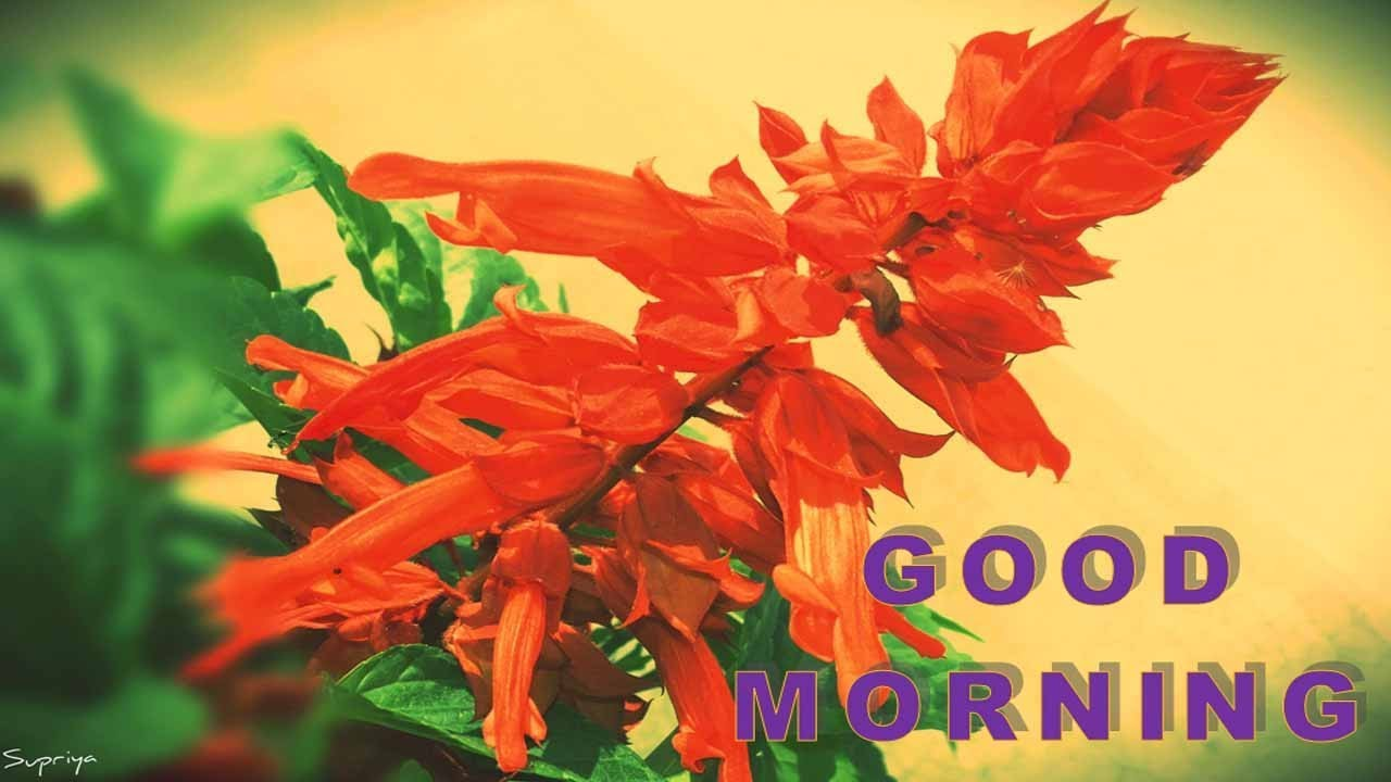 Good Morning SMS Video | Good Morning Message | Good Morning SMS