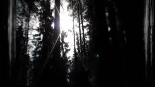 Хорошо в лесу весной 18