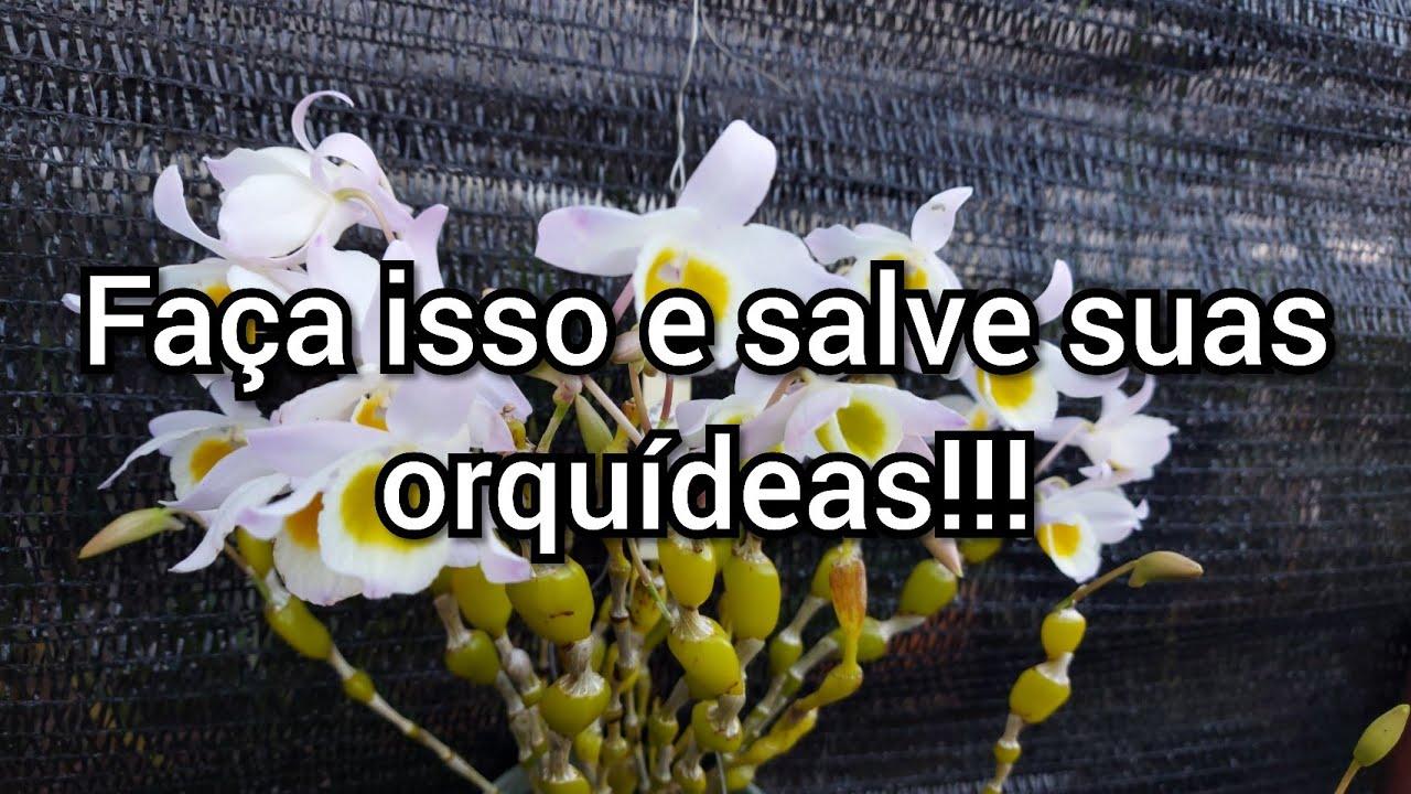Faça isso e salve todas suas orquídeas!!!