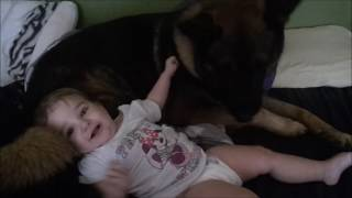 Working Dog And A Baby.