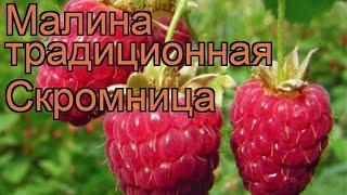 видео Малина Скромница