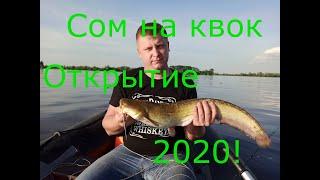 Сом на квок Открытие 2020 Река Волга
