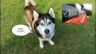 Funny Dog Sherpa gets mixed up again and calls for Help | Sponsored by Rhino Products