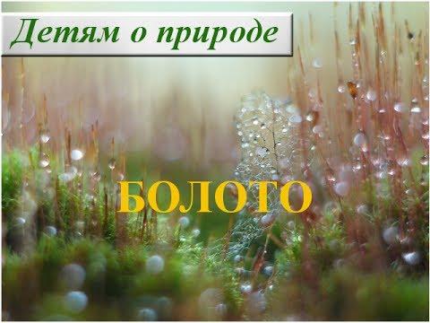 Рассказ о болоте для детей ☁ Что такое болото? Что растет на болоте?