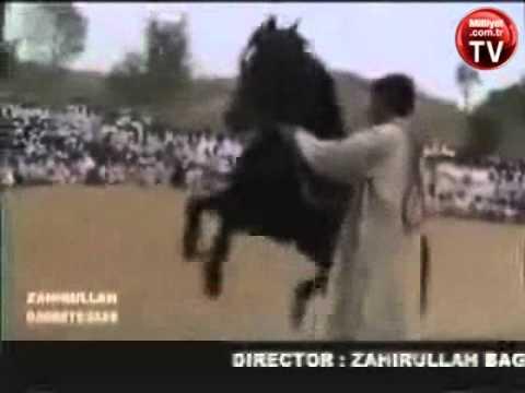 Atın ilginç dansı video izle