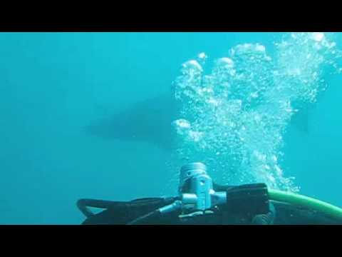 Scuba Diving With The Sand Tiger Sharks North Myrtle Beach Sc You