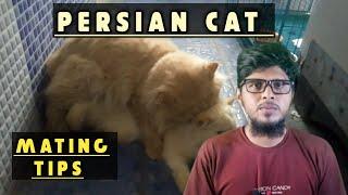 cat breeding tips |persian cat mating tips | ig pets