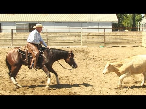 Cutting Horse Ranch Sorting Trail Riding Horse For