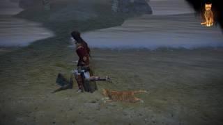 Path of Exile: Orange Cat Pet
