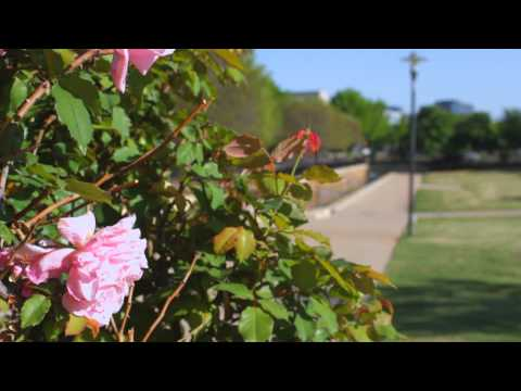 Addison, TX - Better Homes and Gardens Real Estate (Texaplex Texas)