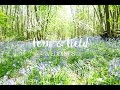Fern and Field Spring Open Day ~ Outdoor wedding venue in Kent
