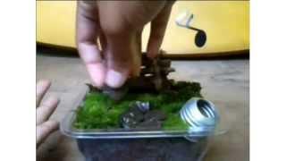 ( Diy )cara membuat  taman kecil (miniatur taman)