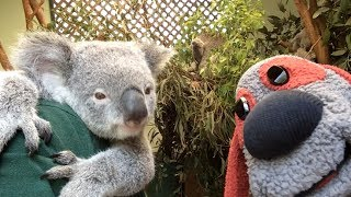 Uncle Interloper Down Under #104 - Featherdale Wildlife Park - Sydney, Australia