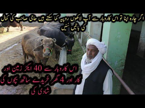 Buffalo Farming For Reaping Large Profit|Three Dimensional Haji Sab Dairy Farm| بھینسوں کا دیسی علاج