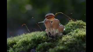 Inside Of Fairytale World Of Snails By Vyacheslav Mishchenko
