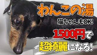 【犬・猫専用】わんこの湯で愛犬が初めてのお風呂♪めっちゃ便利で使いやすい!猫もOK!