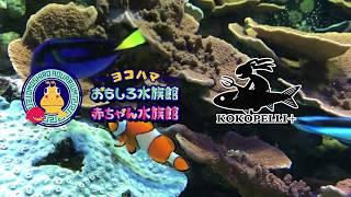 謎めく学校水族館Vol.1〜操られた海洋毒〜紹介PV