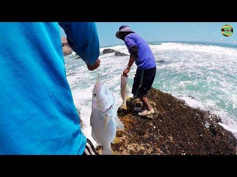 Como Pescar Corvina