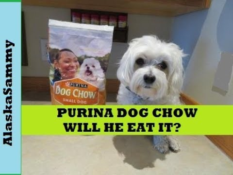 Purina Dog Chow Small Dog Chicken Product Review