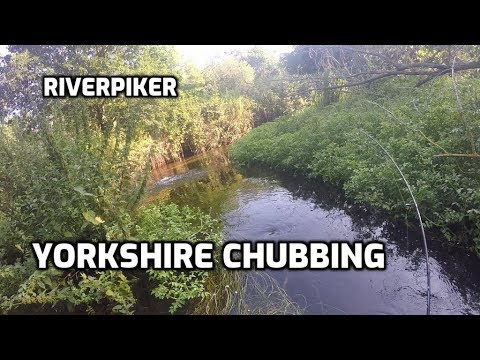 Yorkshire Chubbing - (video 244)