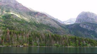 Bald Eagle - St. Mary's Lake - MT, USA