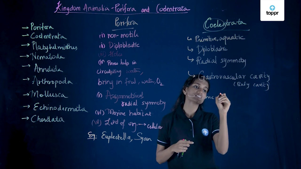 Phylum Echinodermata: Characteristic, Examples with Questions & Videos