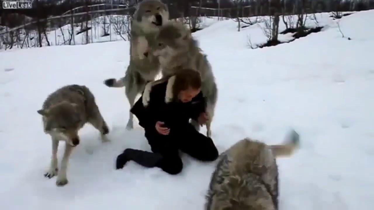 Le migliori amicizie tra uomo e animale