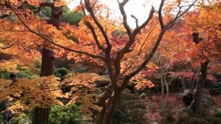 京都 円光寺 紅葉 2011年