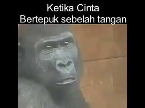 Monyet juga ORANG...@#@$@! ehh...maksudnya ORANG HUTAN.(punya cinta juga soalnya)