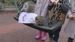 Squirrels wearing capes unleashed in London parks to promote Bugs Bunny