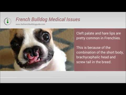 Do french bulldogs have breathing and health problems