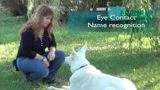 Eye Contact - Teaching Our Dog To Pay Attention To Us